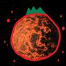 super_tomato